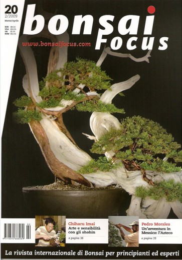 Bonsai Focus IT #20