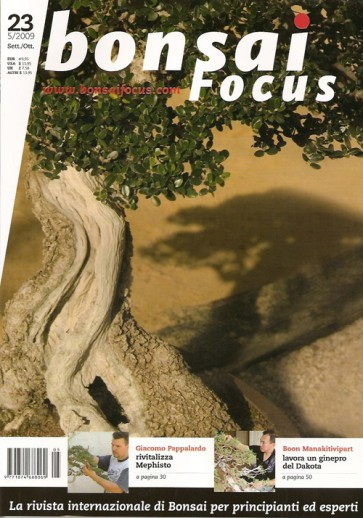 Bonsai Focus IT #23