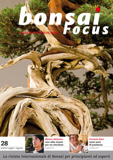 Bonsai Focus IT #28