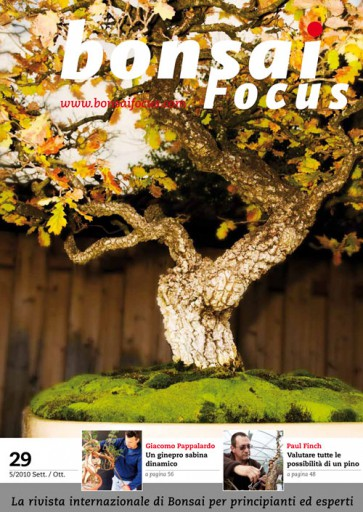 Bonsai Focus IT #29