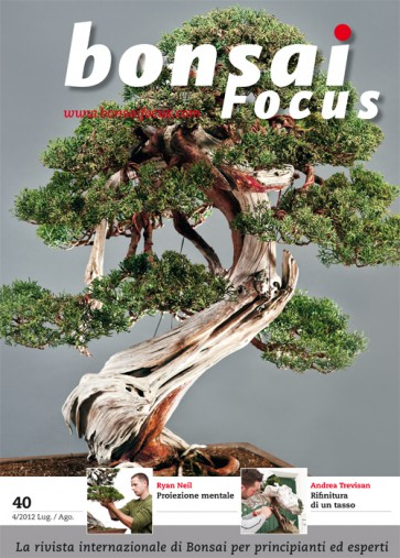 Bonsai Focus IT #40