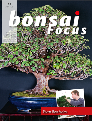 Bonsai Focus IT #78