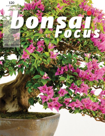 Bonsai Focus NL #120