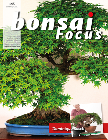 Bonsai Focus NL #145