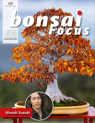 Bonsai Focus NL #152