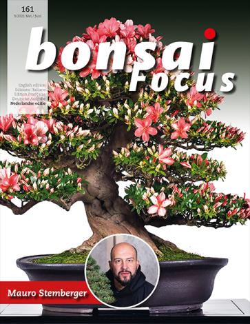 Bonsai Focus NL #161