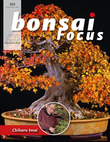 Bonsai Focus NL #163