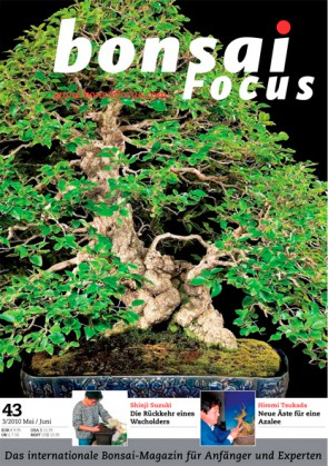 Bonsai Focus DE #43