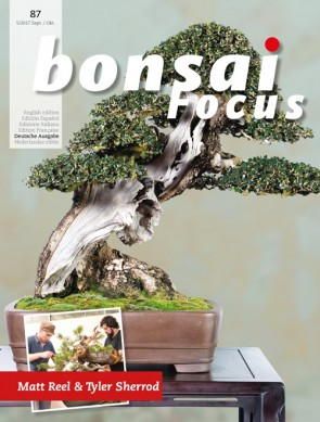 Bonsai Focus DE #87
