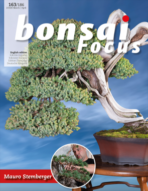 Bonsai Focus EN #163/#186