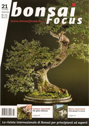 Bonsai Focus IT #21