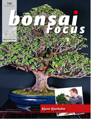 Bonsai Focus NL #146
