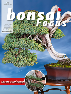Bonsai Focus NL #154