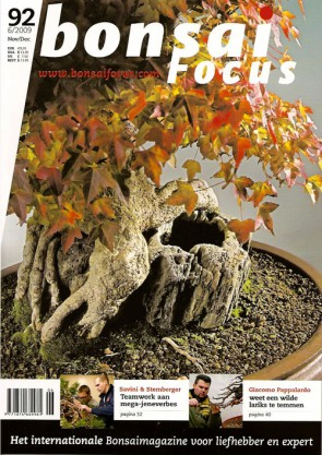 Bonsai Focus NL #92
