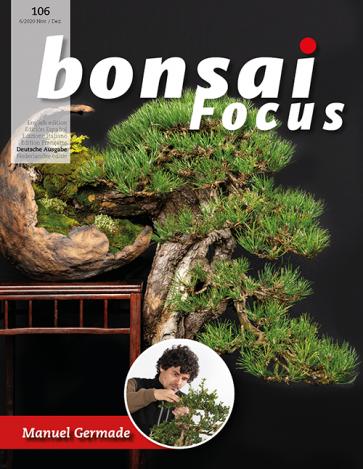 Bonsai Focus DE #106