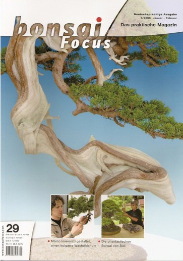 Bonsai Focus DE #29