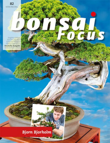 Bonsai Focus DE #82