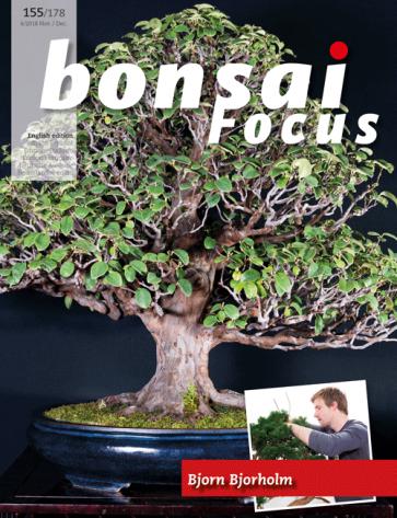Bonsai Focus EN #155/#178