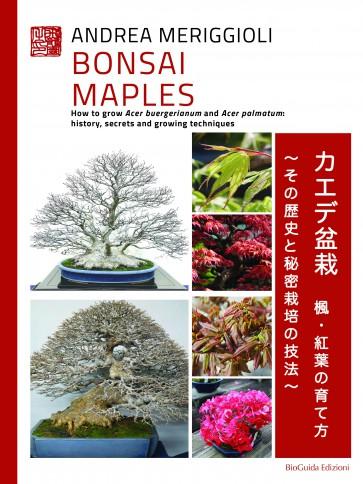Bonsai Maples