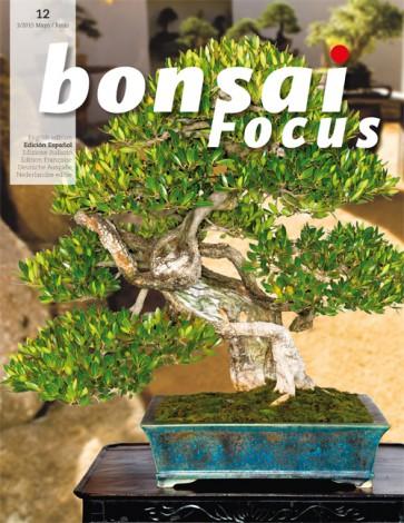Bonsai Focus ES #12