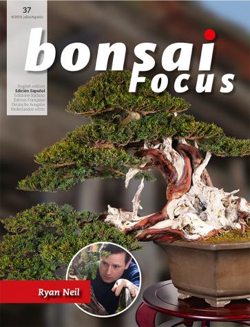 Bonsai Focus ES #37