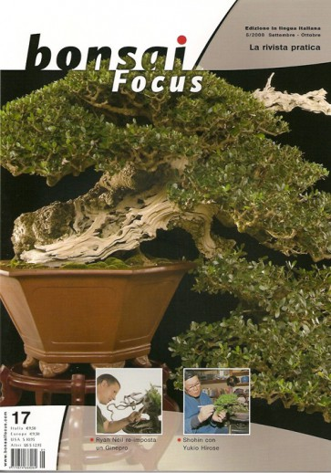 Bonsai Focus IT #17