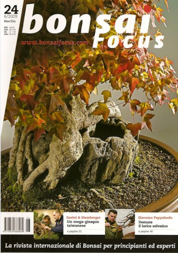 Bonsai Focus IT #24