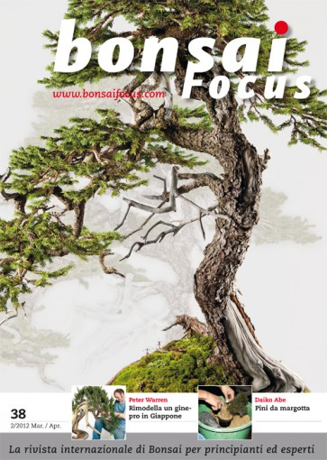 Bonsai Focus IT #38