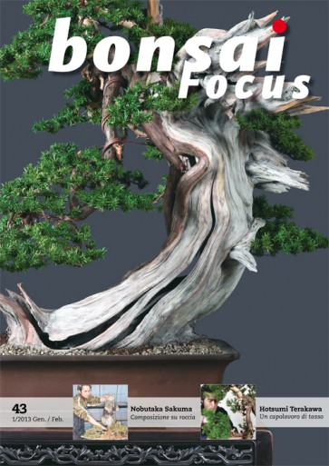 Bonsai Focus IT #43