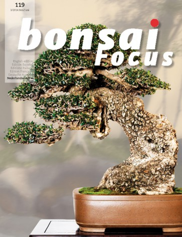 Bonsai Focus NL #119