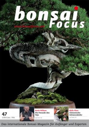 Bonsai Focus DE #47