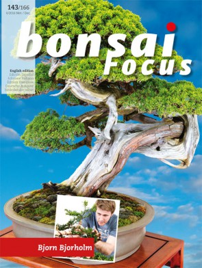 Bonsai Focus EN #143/#166