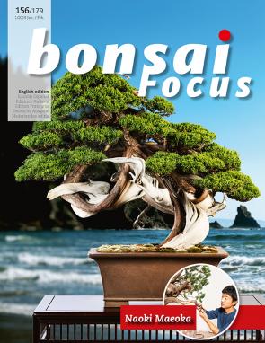 Bonsai Focus EN #156/#179