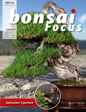Bonsai Focus EN #160/#183