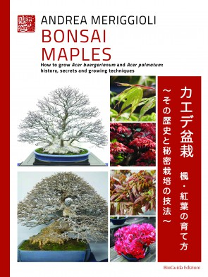 Bonsai Maples