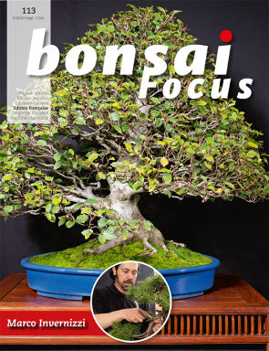 Bonsai Focus FR #113