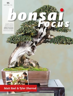 Bonsai Focus FR #95