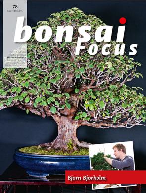 Bonsai Focus IT #78