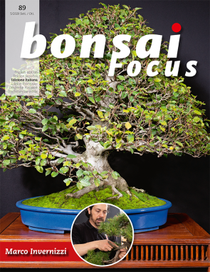 Bonsai Focus IT #89