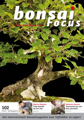 Bonsai Focus NL #102