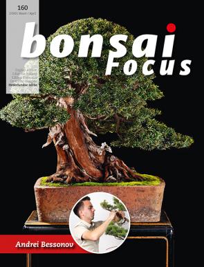 Bonsai Focus NL #160