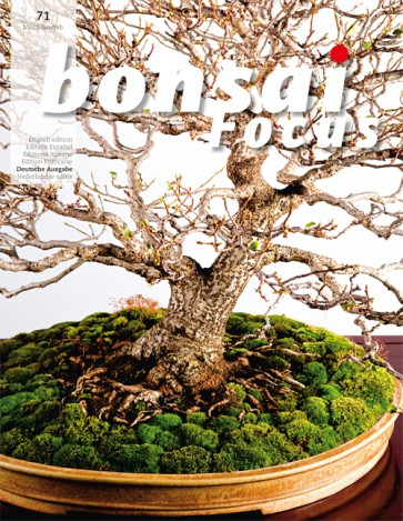 Bonsai Focus DE #71