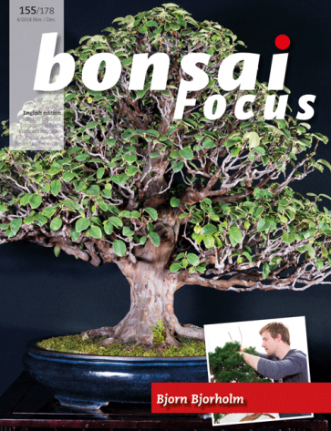 Bonsai Focus EN #155/#178