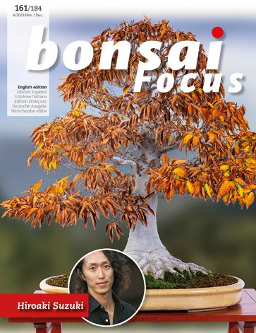 Bonsai Focus EN #161/#184
