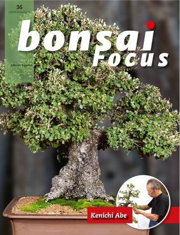 Bonsai Focus ES #36