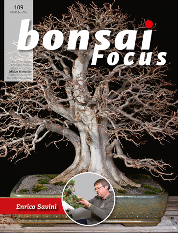 Bonsai Focus FR #109