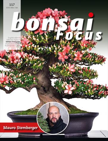 Bonsai Focus FR #117