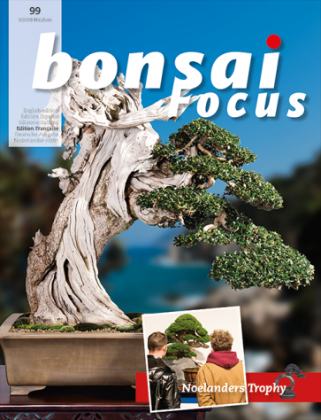 Bonsai Focus FR #99