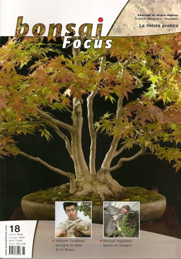 Bonsai Focus IT #18
