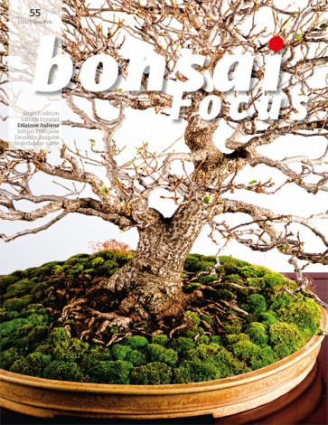 Bonsai Focus IT #55
